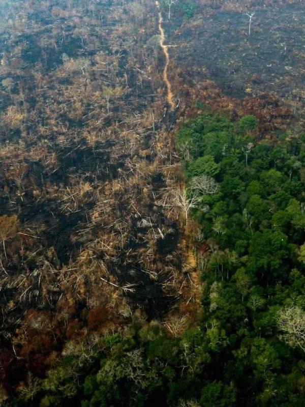 El colmo de los colmos, ahora España importa carne procedente de la deforestación de la Amazonia