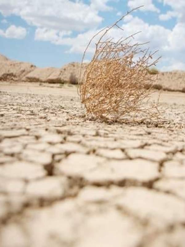 Día Mundial de Lucha contra la Desertificación y la Sequía, 17 junio de 2020, España en el 'punto de mira'