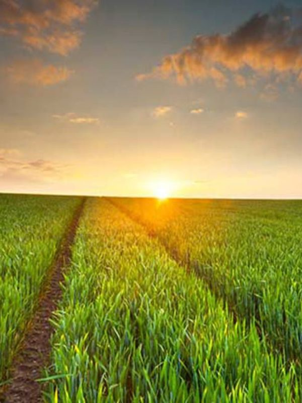 La agricultura y ganadería industriales son unas de las principales responsables de la emergencia ecológica