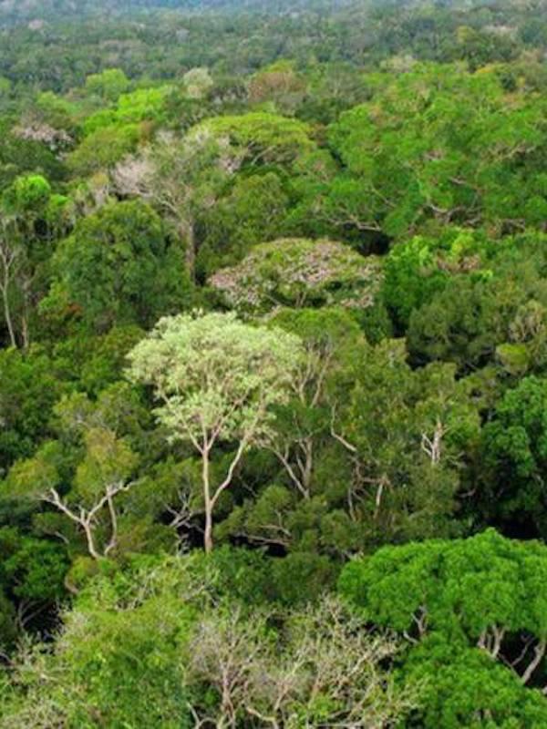 Los árboles que soportaron mejor las sequías en el pasado tienen menos riesgo de mortalidad