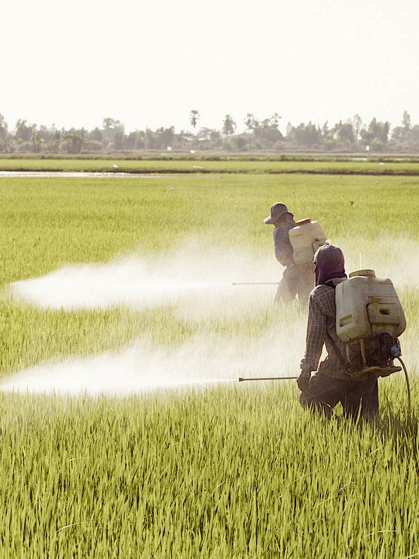 México. Acuerdan Semarnat y Consejo Nacional Agropecuario mesa de trabajo en torno al glifosato