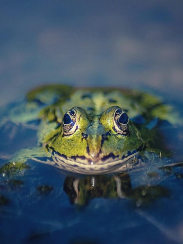 Importar especies exóticas a España tiene sus consecuencias penales