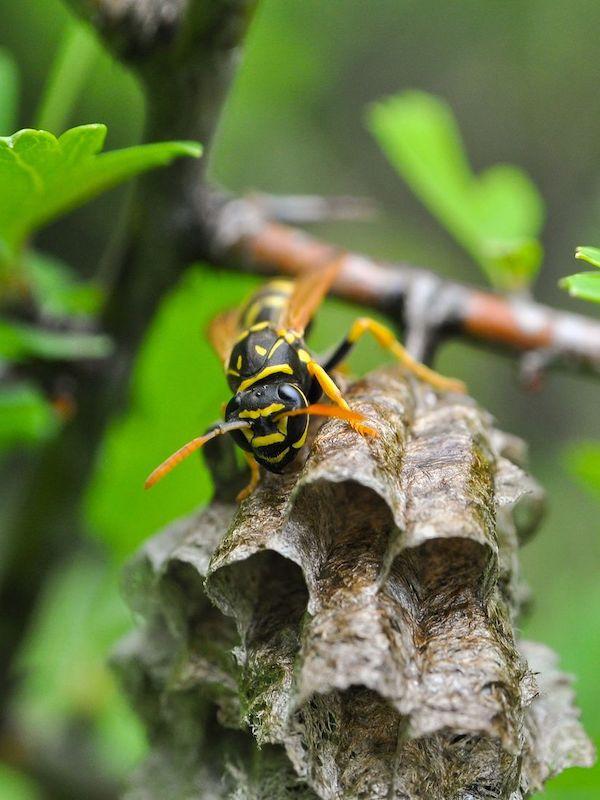 Arranca la red estatal de investigación sobre especies invasoras