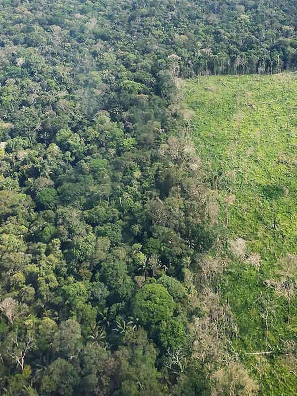 ¿Qué supone la pérdida de bosques?