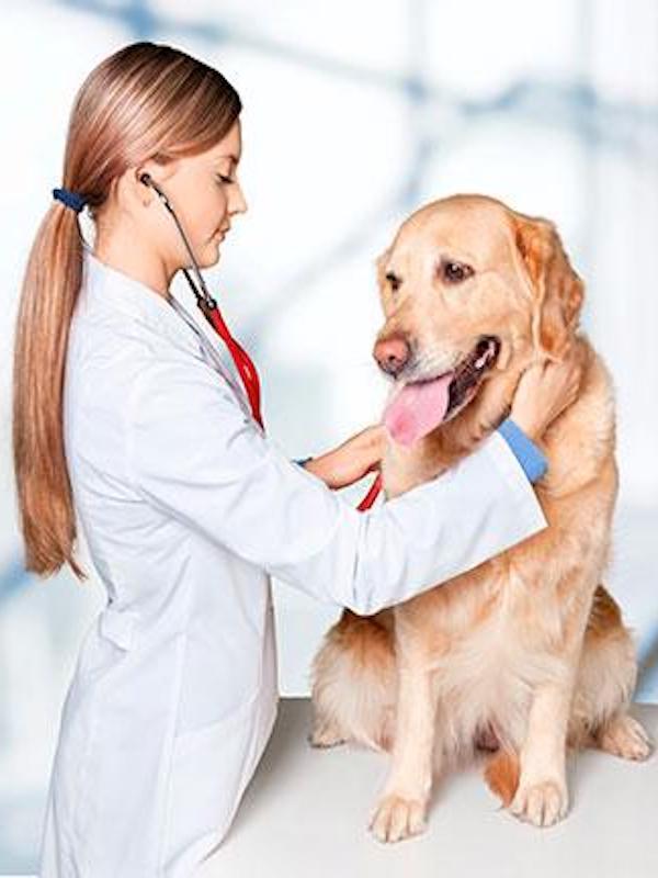 No utilices en exceso desinfectantes incrementan los problemas gástricos de tus mascotas