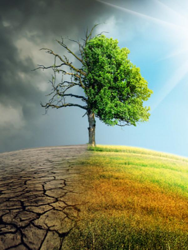 Documento de Diagnóstico y Alcance el Plan Andaluz de Acción por el Clima (PAAC) 'avalado' por 78 organizaciones