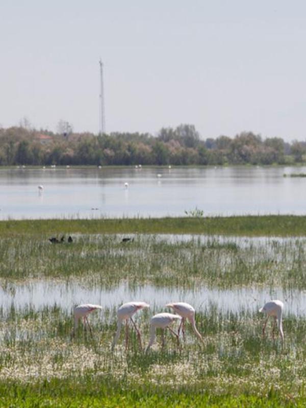 Robando el agua en Doñana