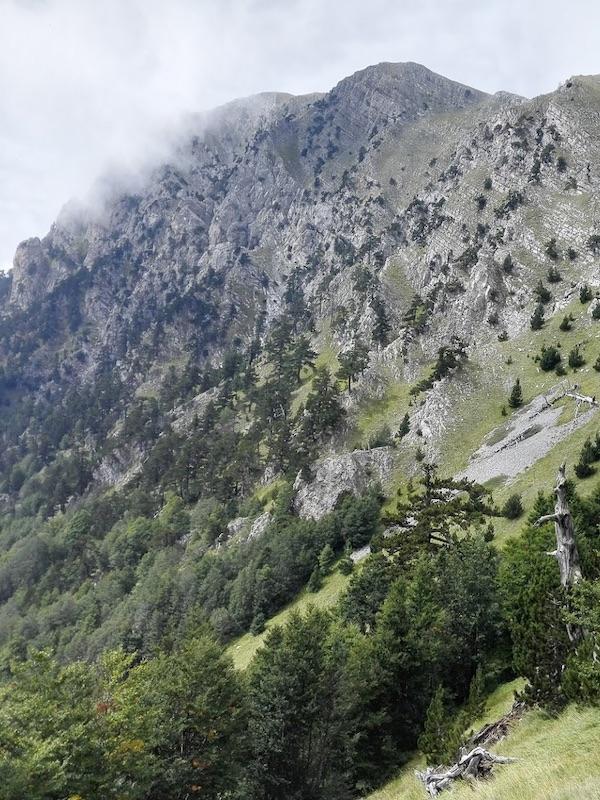 La crisis ocasionada por la peste negra del siglo XIV favoreció el resurgimiento de los bosques de montaña mediterráneos
