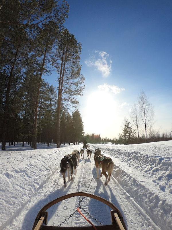 Los perros de trineo aparecieron hace 9.500 años en Siberia