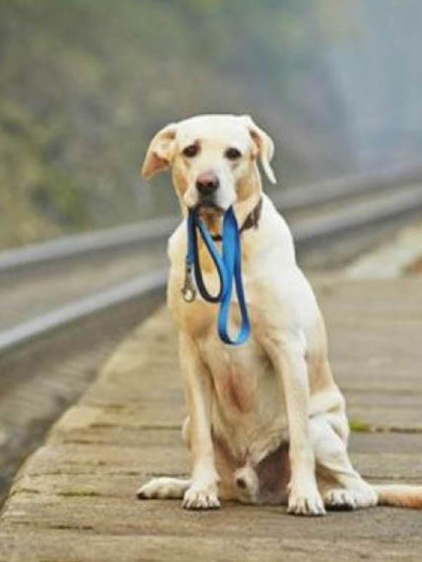 La mayoría de perros abandonados en España no están identificados con microchip