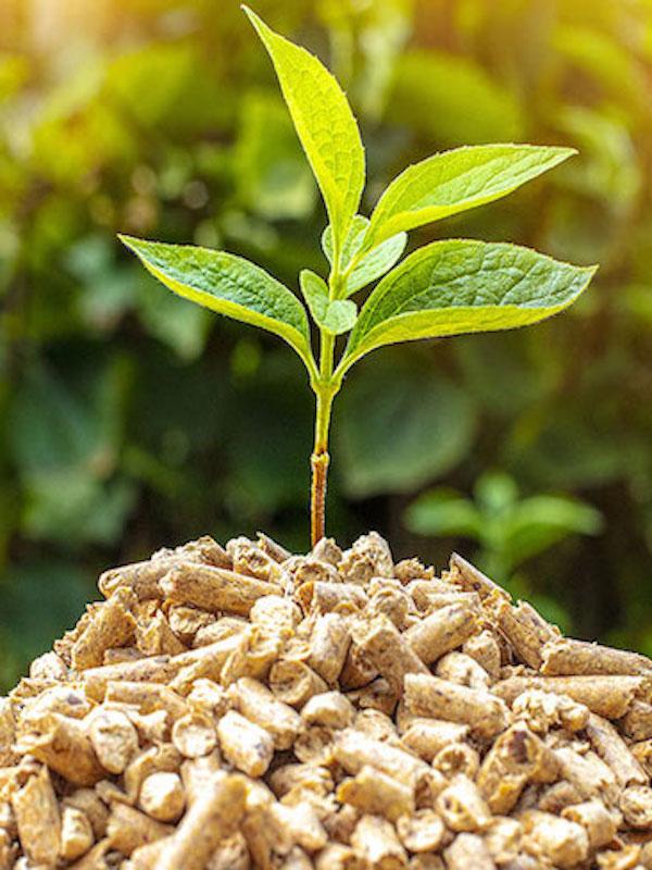Ence en Huelva pone en valor la energía con biomasa