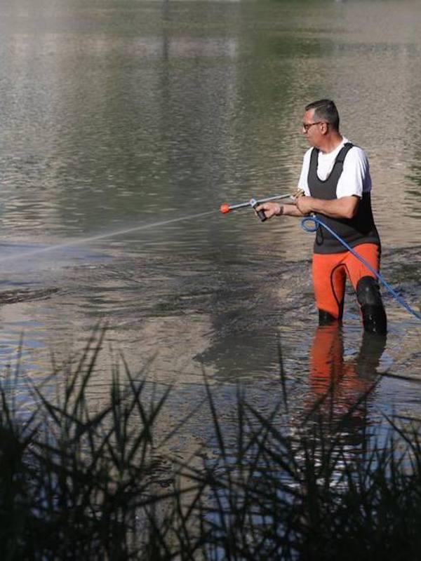 Zaragoza contra la mosca negra en los ríos Ebro y Gállego