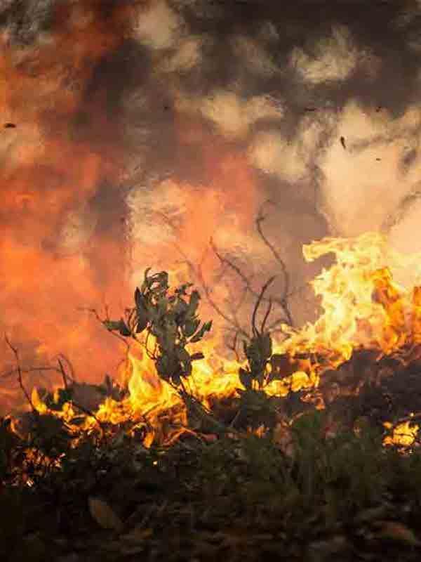 Los incendios forestales en el Planeta fueron 'devastadores'