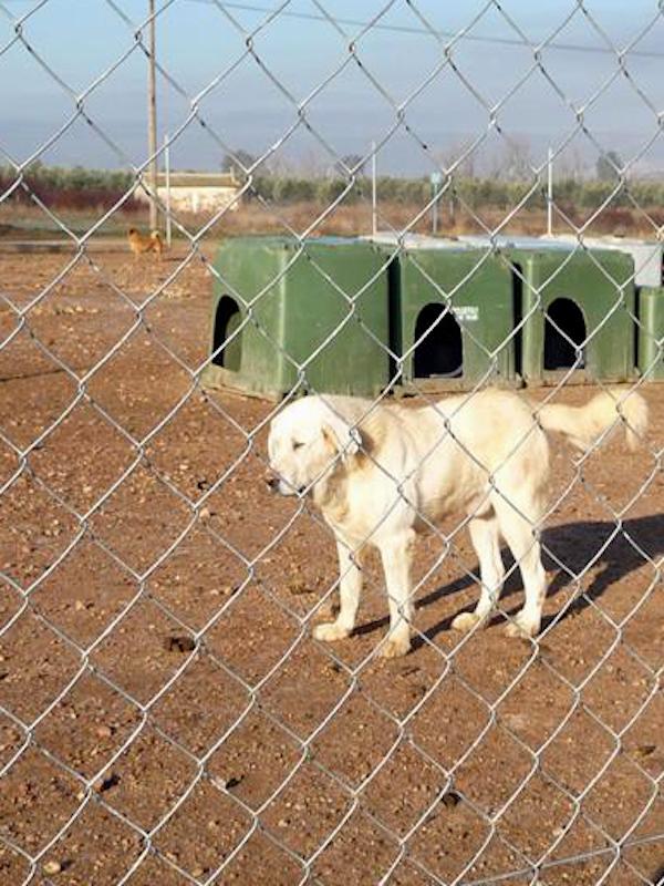 La Ley de Bienestar, Protección y Defensa de los Animales de Castilla-La Mancha, floja, flojísima