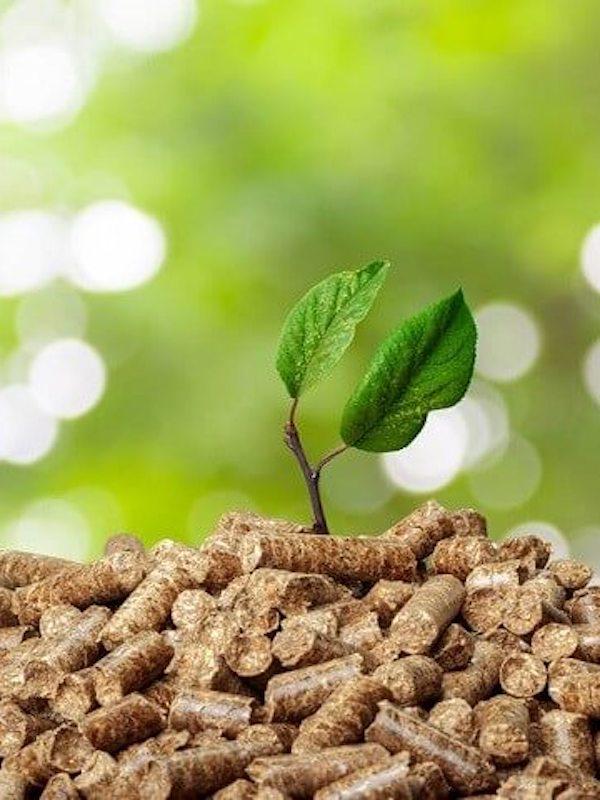 La Patronal de la biomasa ve en el RD sobre energías renovables un paso muy positivo para lograr los objetivos en 2050