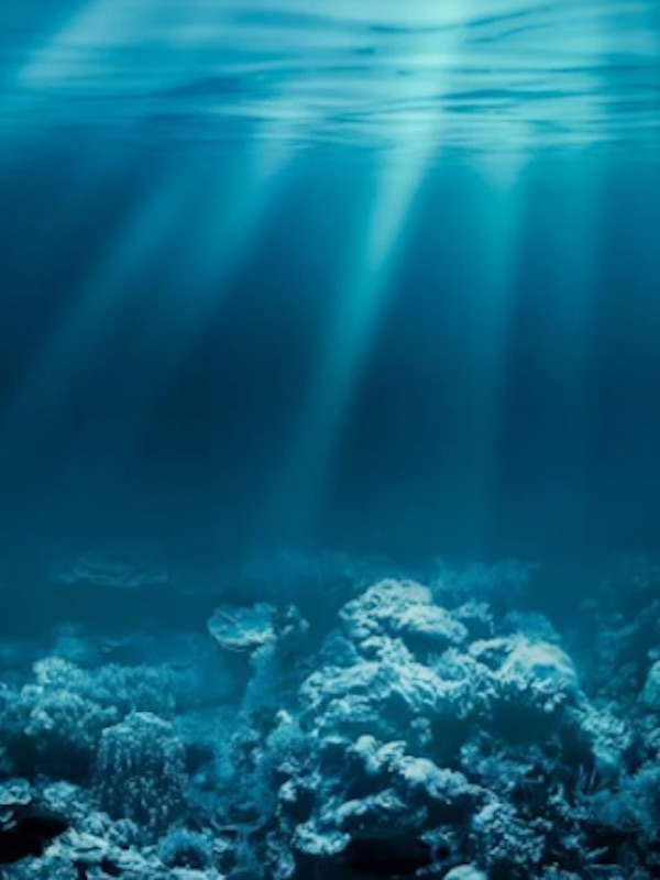 Grandes seres unicelulares hallados en el fondo del océano Pacífico