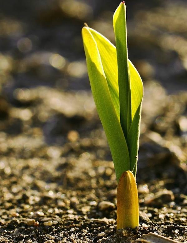 La inteligencia 'climática' de las plantas