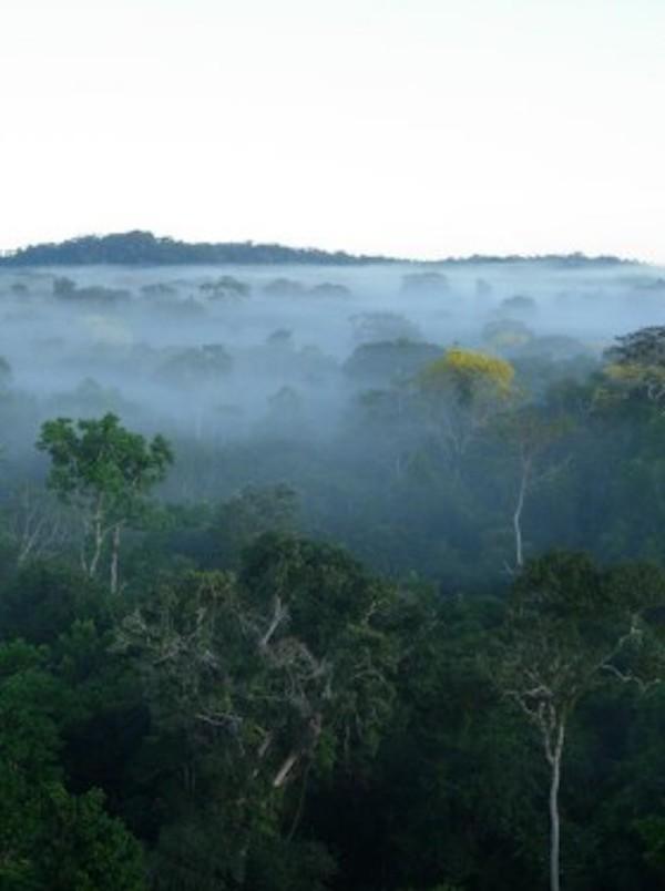 Bosques tropicales 'saturados' de carbono
