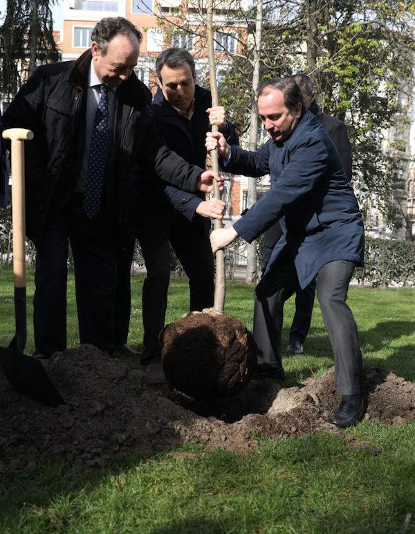 El Retiro de Madrid recupera sus tradicionales olmos gracias a nuevos árboles resistentes a la grafiosis