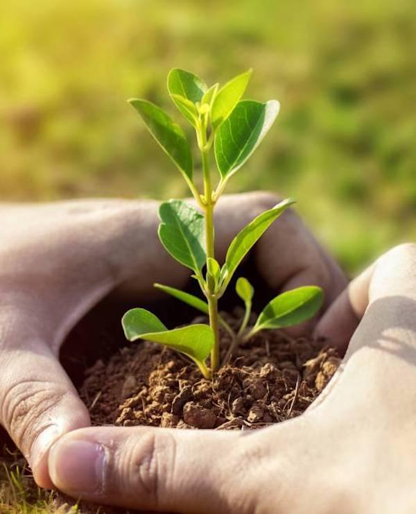 Ayudas y subvenciones para mejorar la cualificación de personas trabajadoras en la economía verde