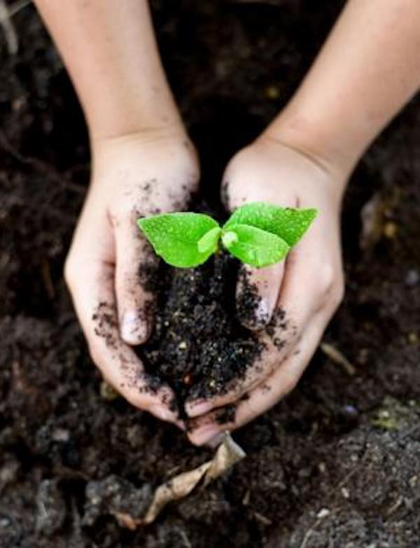 México. Convoca Semarnat a participar en el Premio al Mérito Ecológico 2020