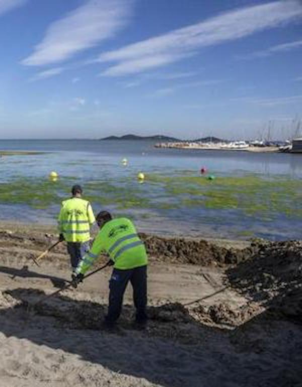 Seo Birdlife impulsa en L'Albufera un proyecto para renaturalizar las playas del litoral