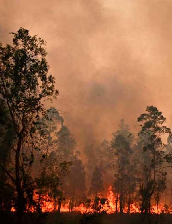 Incendios como los de Australia son un 30 por ciento más probables