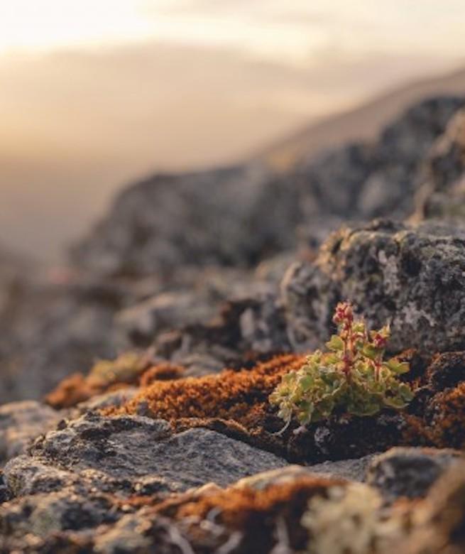 ¿Qué normas siguen las plantas que viven i crecen en los extremos?