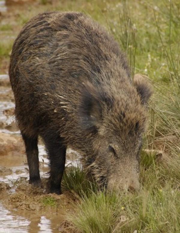 Galicia quiere permitir a los cazadores seguir matando animales