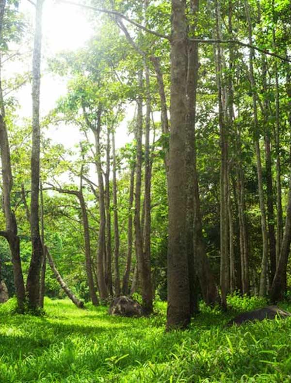 21 de marzo, Día Internacional de los Bosques