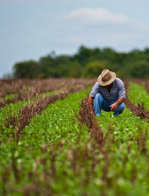 Ante la pandemia, Andalucía amplía los servicios esenciales de Agricultura