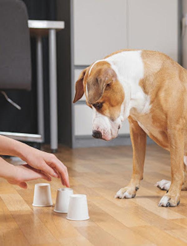 Jugar en familia con vuestro perro sin salir de casa