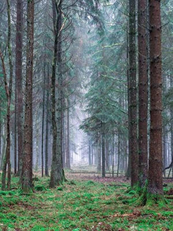 México. Semarnat, Conafor y propietarios de bosques firmaron acuerdo para garantizar la preservación de este recurso forestal