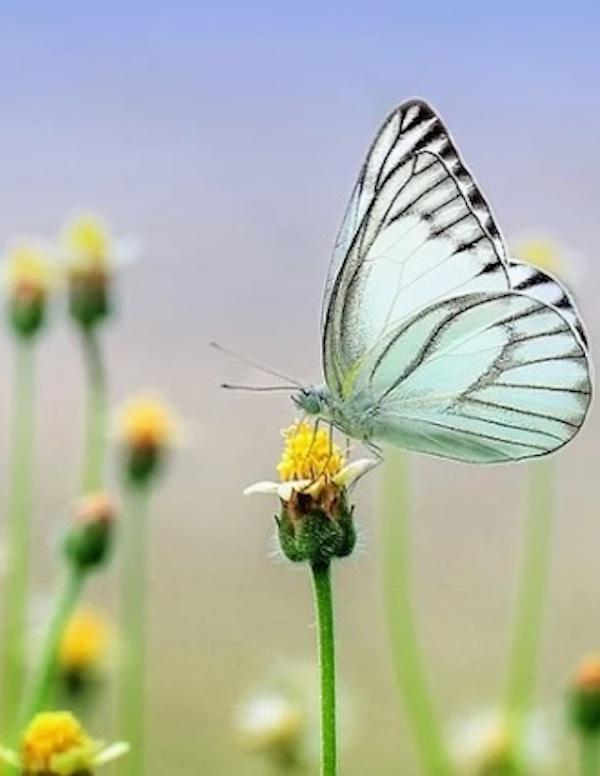 La Asamblea de ONU Medio Ambiente a celebrar en 2021 se centrará en soluciones basadas en la naturaleza