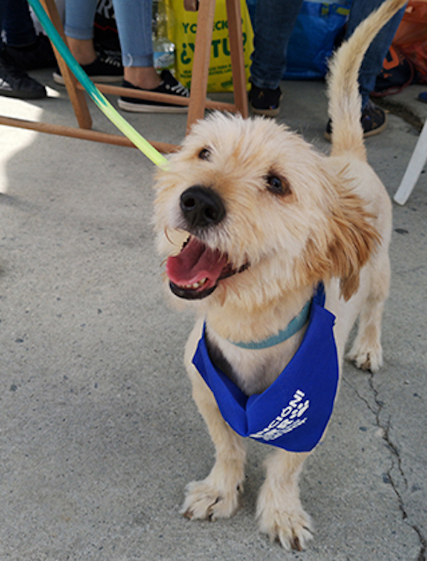 Granada traslada indicaciones para el cuidado de mascotas durante la crisis sanitaria