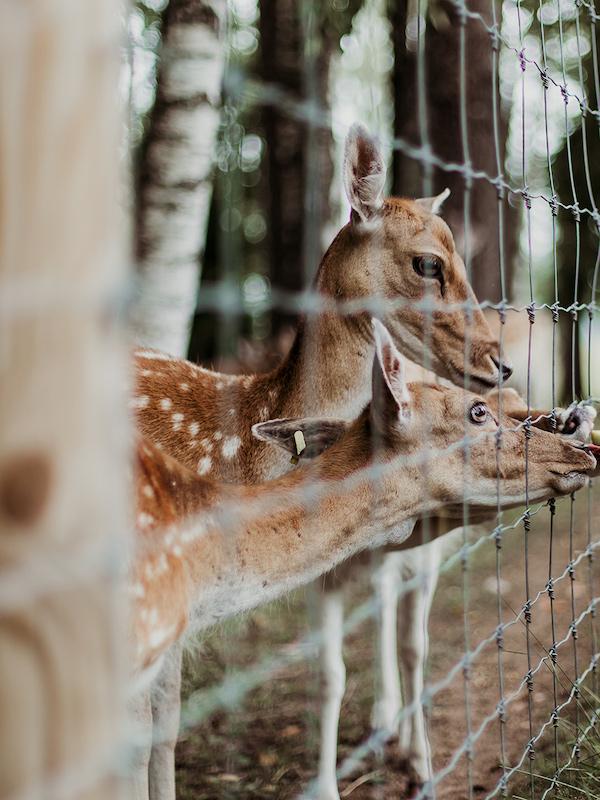 Hay que verificar la situación de los animales en cautividad durante el 'Estado de Alarma'