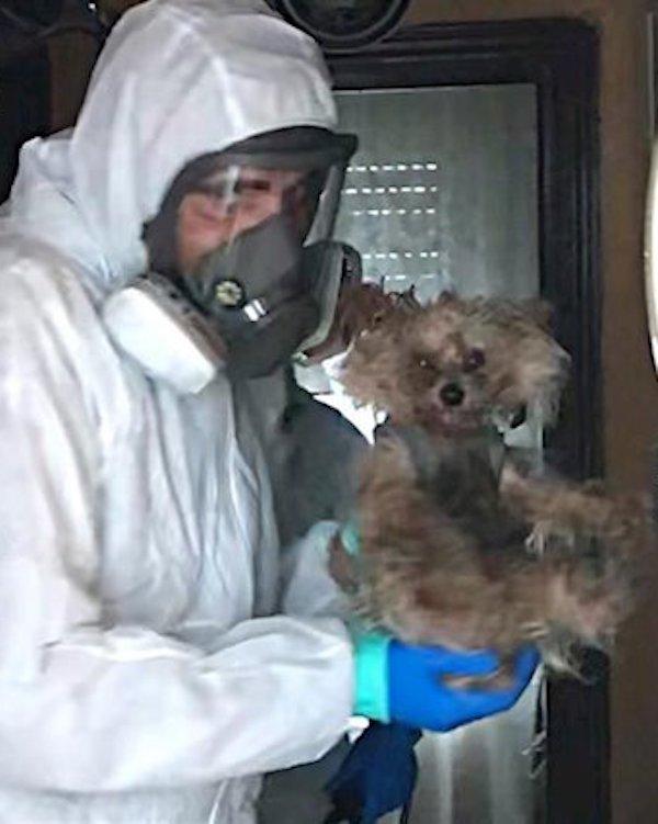 En busca de familias de acogida para perros de hospitalizados por COVID-19