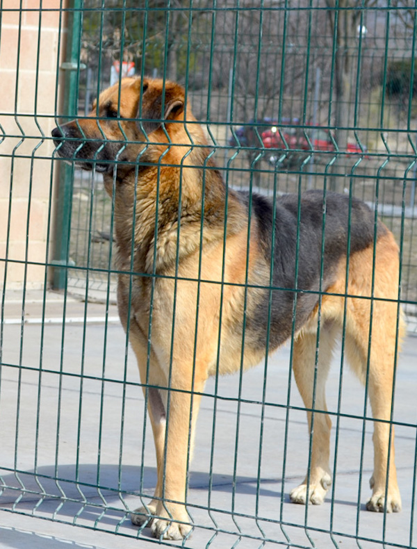 El alcalde de Valencia 'manipula' información sobre protectoras de animales
