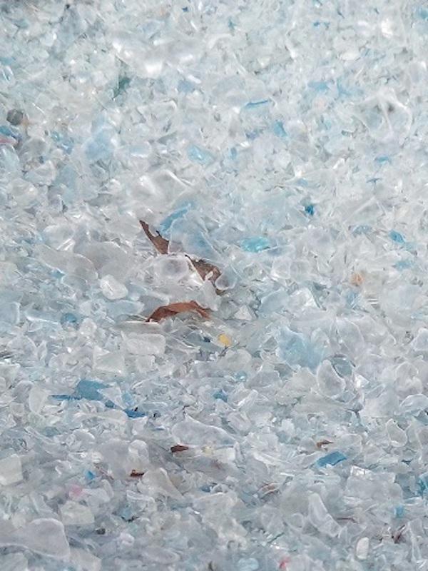 Tecnología verde para utilizar escamas de pescado para sustituir plástico en pantallas electrónicas flexibles
