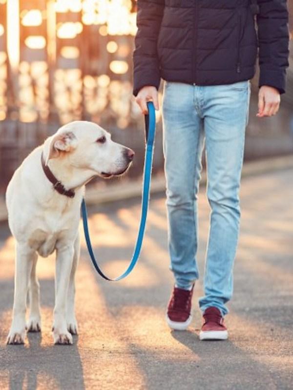 Alcañiz prohíbe pasear perros lejos del domicilio habitual