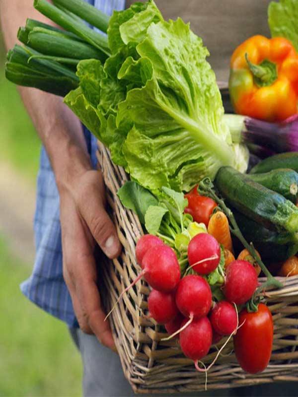 Agroecología ante el COVID-19