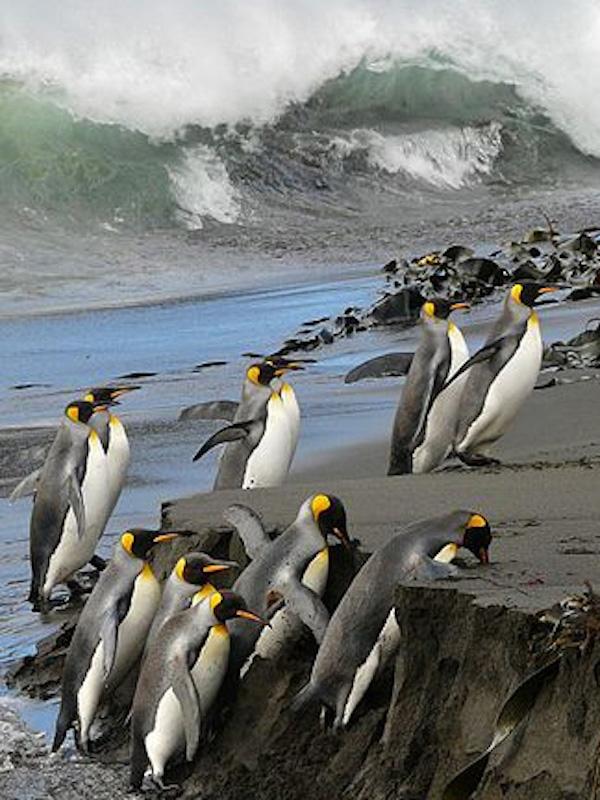 Las especies marinas proliferan en los polos y menguan en el ecuador