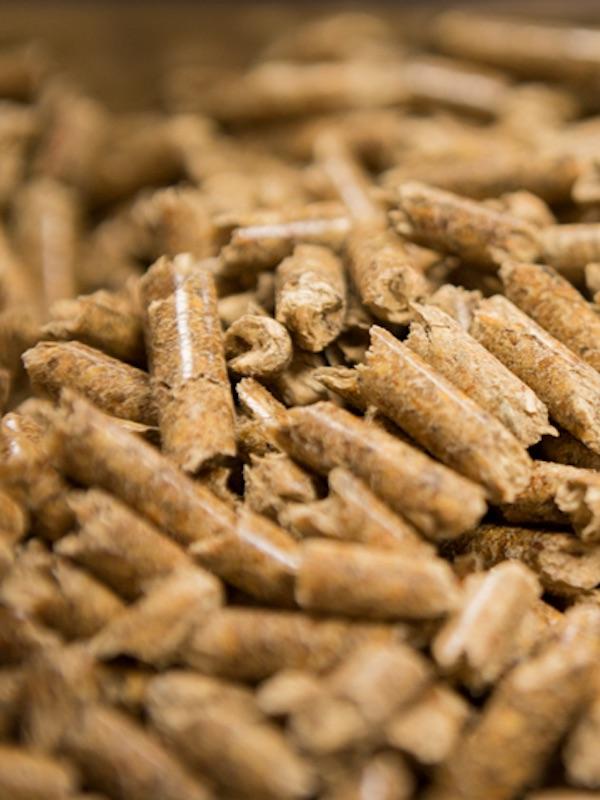El sector de la biomasa sigue 'al pie del cañón' trabajando para llevar la energía a la población