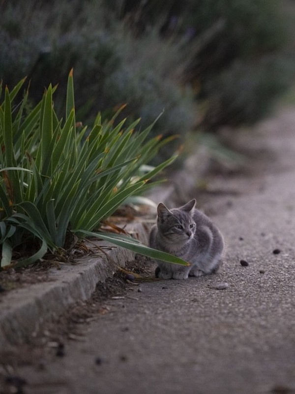 El Ayuntamiento de Toledo permite la alimentación de los gatos de las colonias