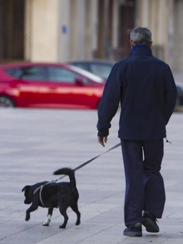 La Fiscalía pide analizar si las adopciones de perros estos días son honestas o bien una excusa para salir