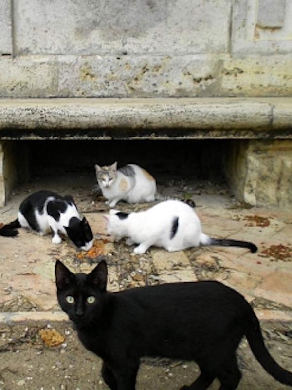 Amenazas de multa y restricciones abusivas a las cuidadoras de colonias felinas en Valencia