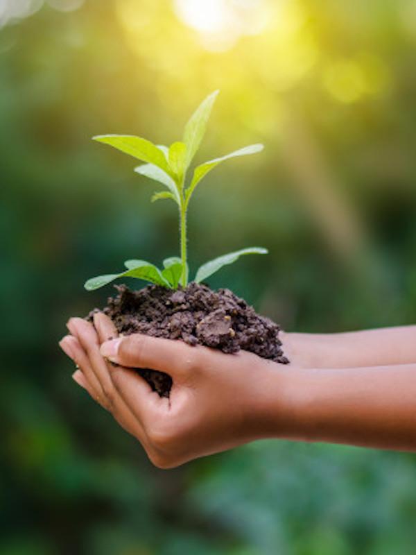 El COVID-19 no nos traerá un Planeta más verde
