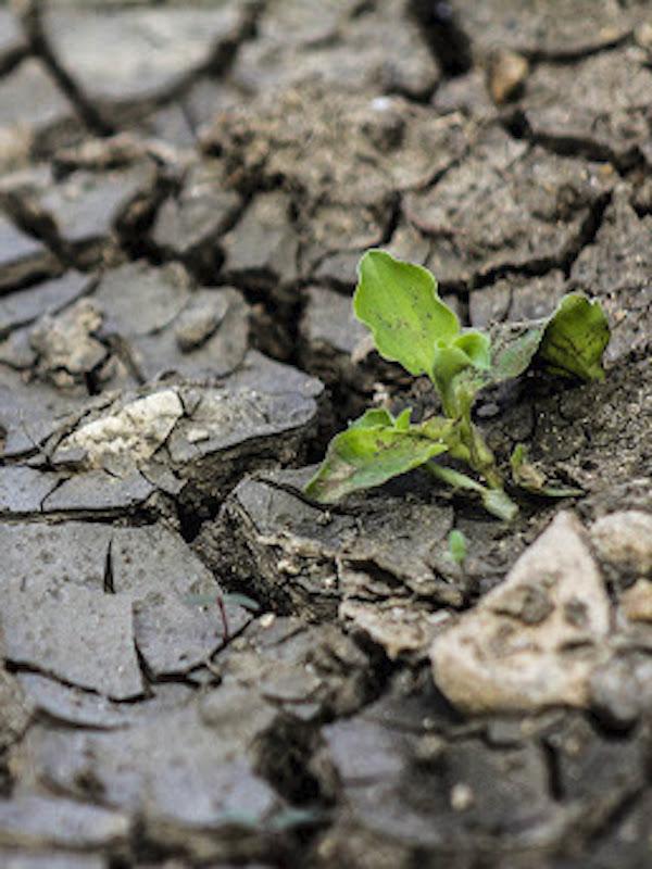 Borrador del plan de adaptación al cambio climático