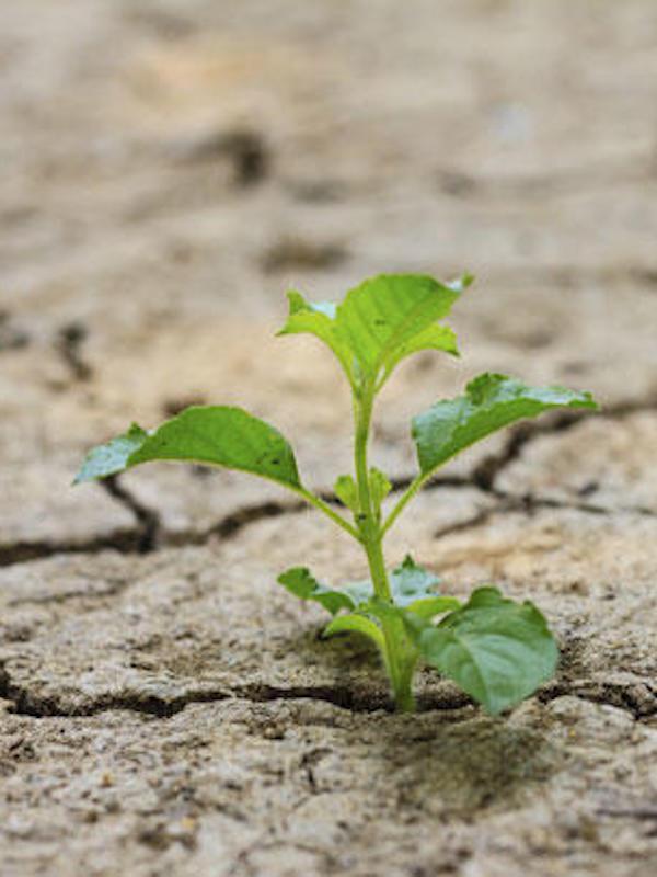 La CEOE opina que la salida del COVID-19 no afectará negativamente el cambio climático