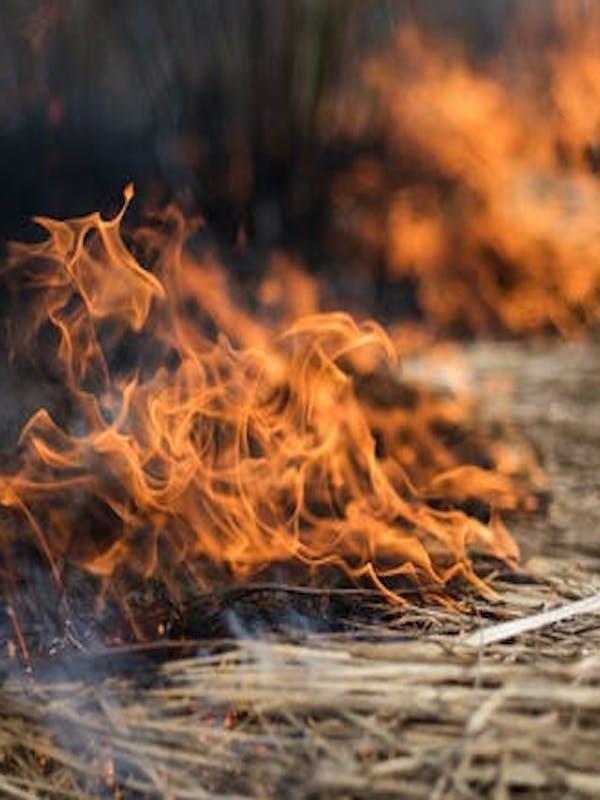 Australia. Los incendios forestales se agravaron por la tala de bosques nativos